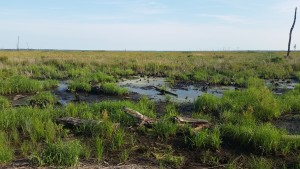 Dismal Swamp Railroad Ditch near Lake Drummond